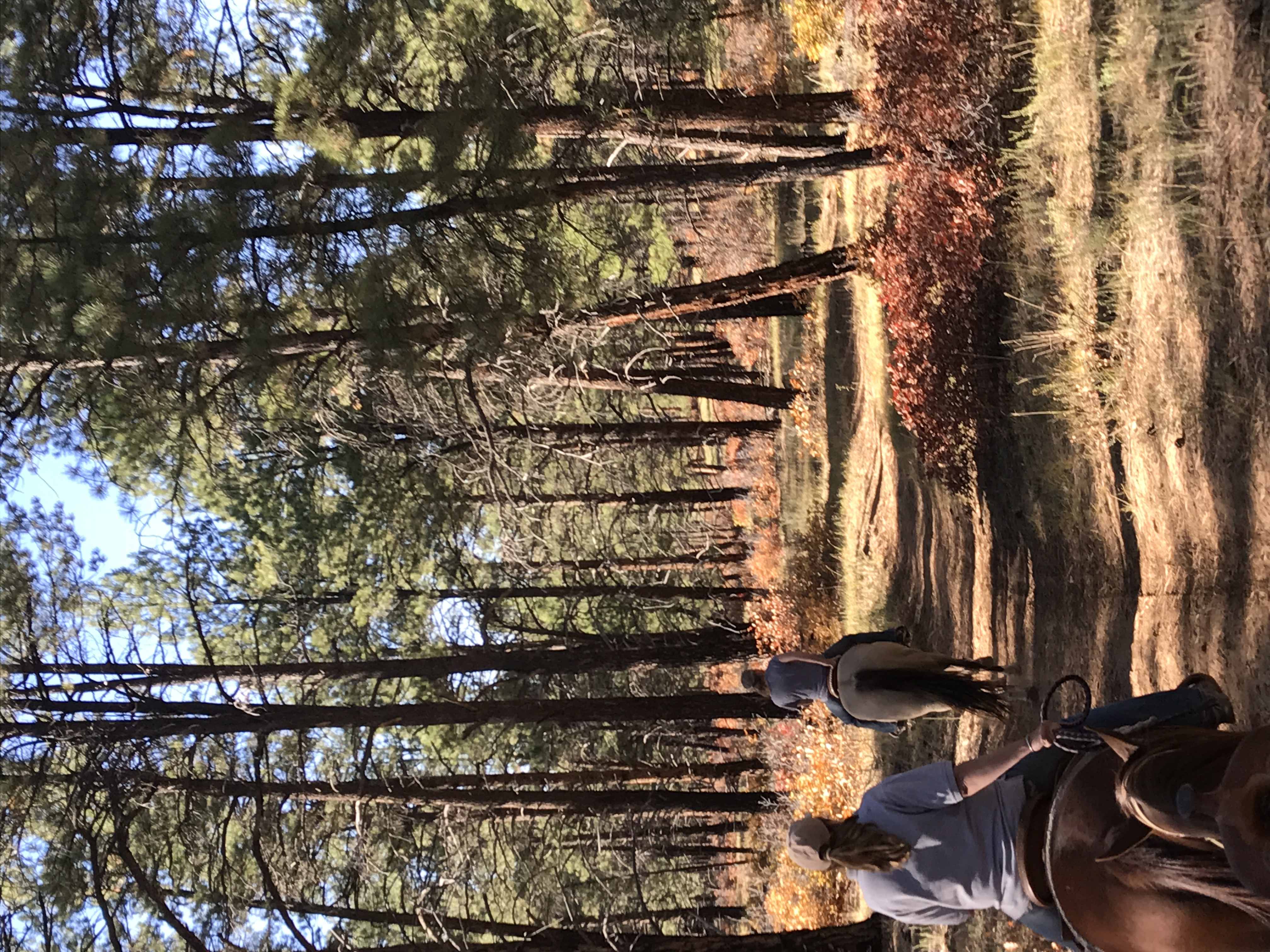 trail near sauls creek stables