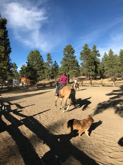 riding arena at the stables