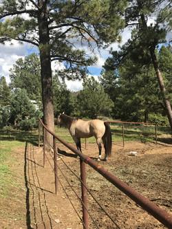 happy horse in paddock