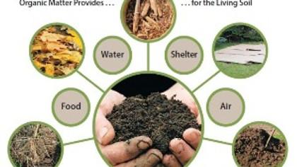 Growing Soil & Plants