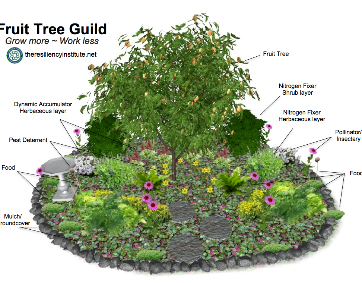 Fruit Tree Guild_edited.png