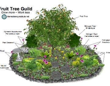 Fruit Tree Guild_edited.png