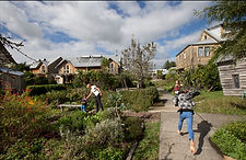 Urban Permaculture Auckland.jpg
