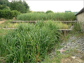 Reed Bed Greywater System.jpg