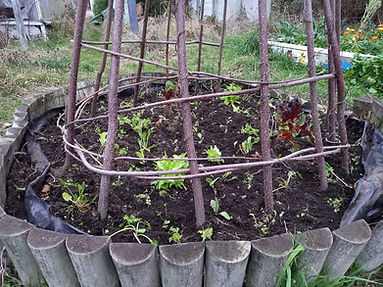 circle garden after plant out.jpg