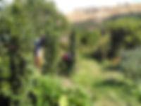 SFF_edited.jpg