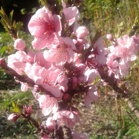 Spring at Sumner Food Forest