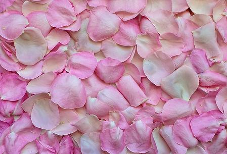rose-petals-3194062.jpg