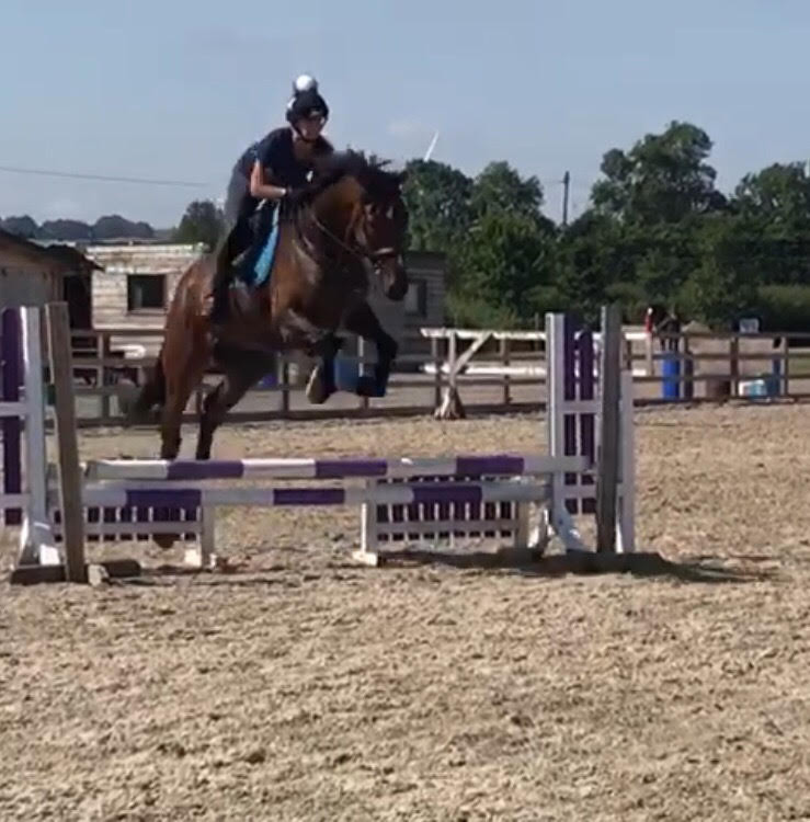 Bear, first show jumping outing :)