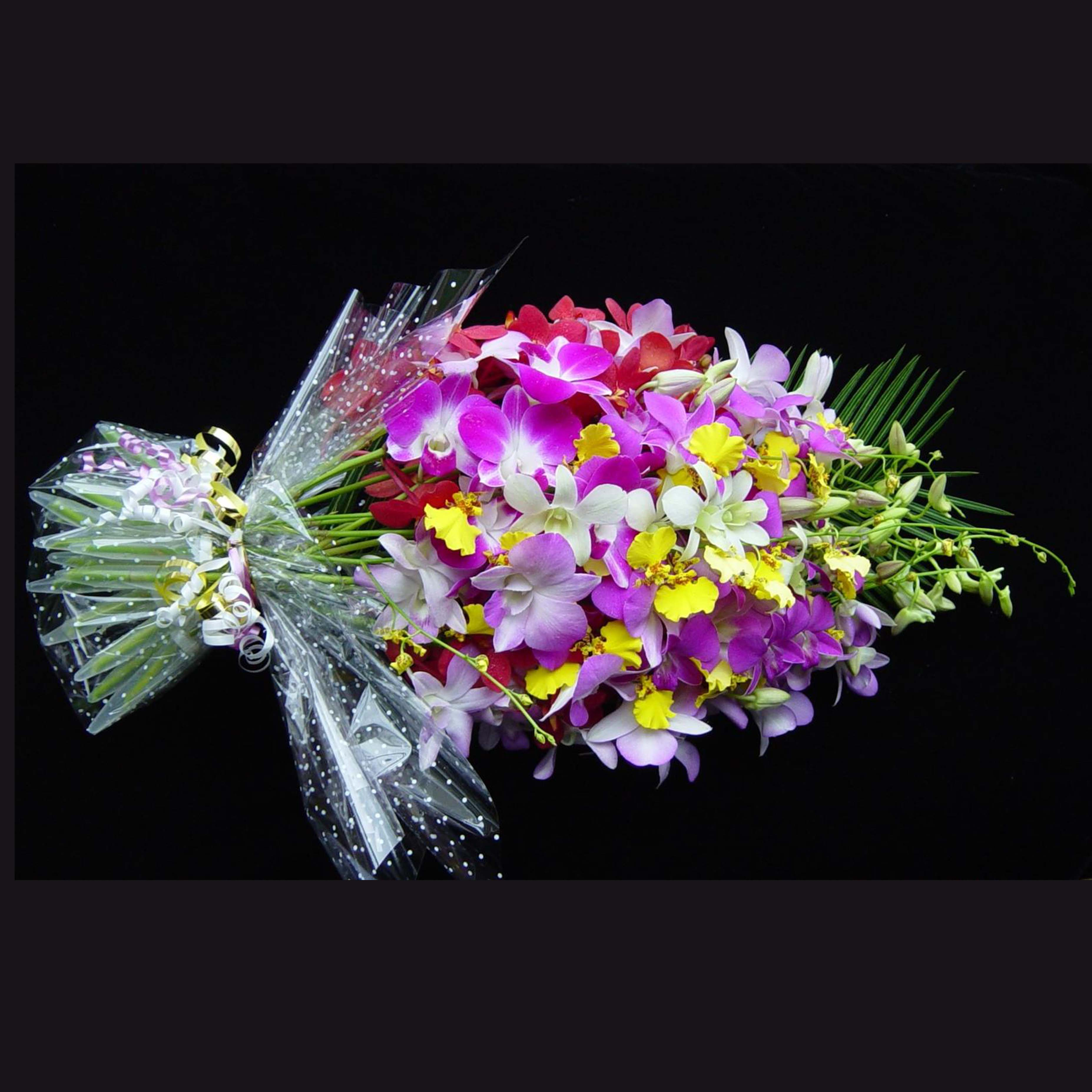 Home Majestic Orchids Flower Delivery Free Local Darwin Interstate