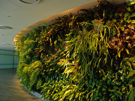 Greenwalls and Vertical Gardens
