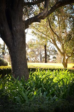 macarthur park-6.jpg