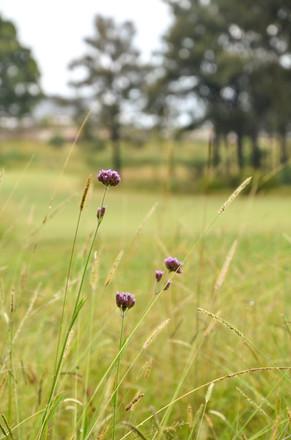 Bingara Gorge Golf-6.jpg