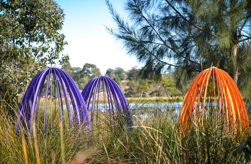 Airds Pond-19.jpg