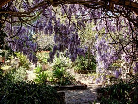 Gardens of Camden Park