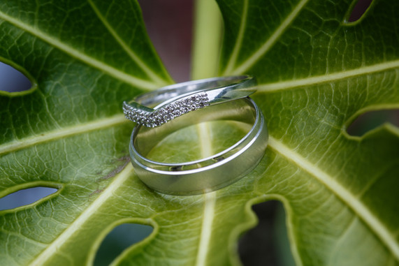 Wedding rings pictured on a green rubber plant leaf.