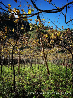 @ Justino's Madeira Wines