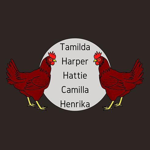 website graphic of chicken mascot names