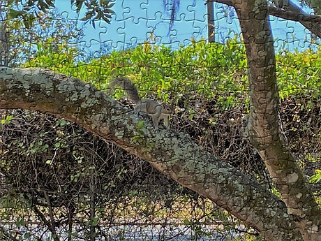 squirrel tree puzzle effect by pictureto