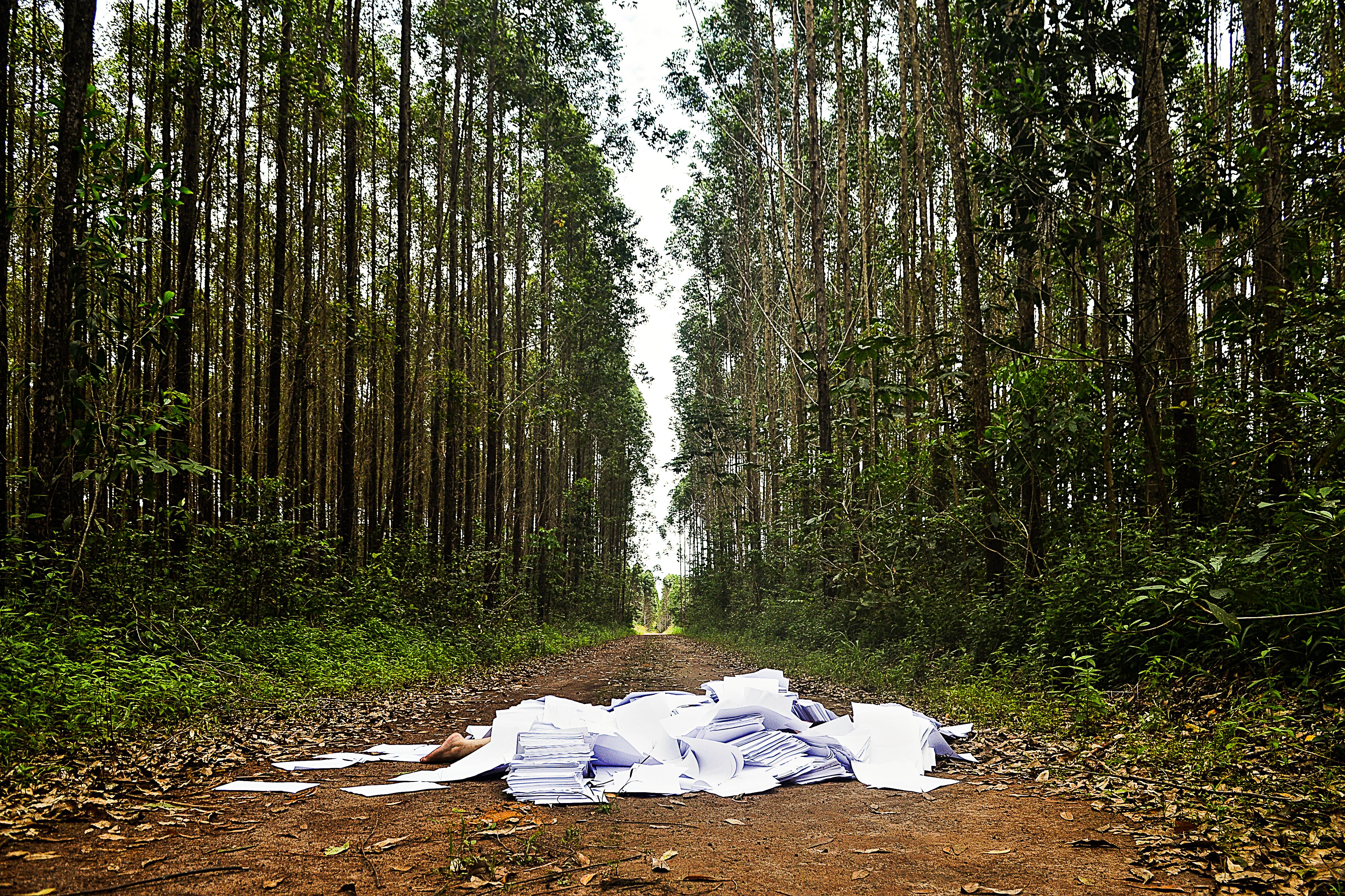 estudo 4: celulose | contaminações sobre a floresta