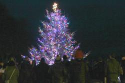 Country Christmas Town Tree Lighting