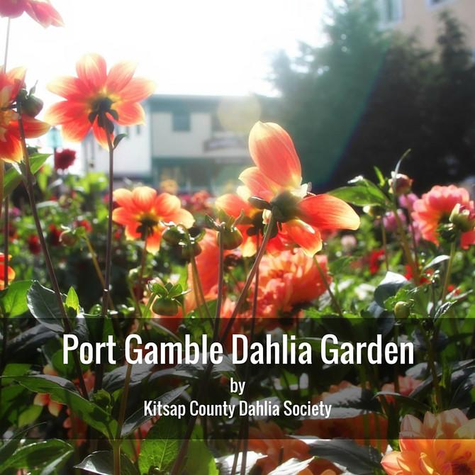 Take a walk through the Dahlia Garden