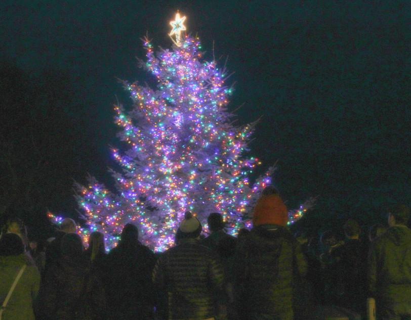 Tree lighting 1.jpg.jpg