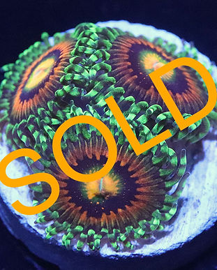 26.03 Rainbow Incinerator 3p sold.jpg