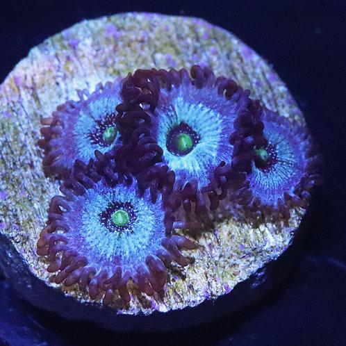 Frozen Nebula 4 Polyp  - WYSIWYG