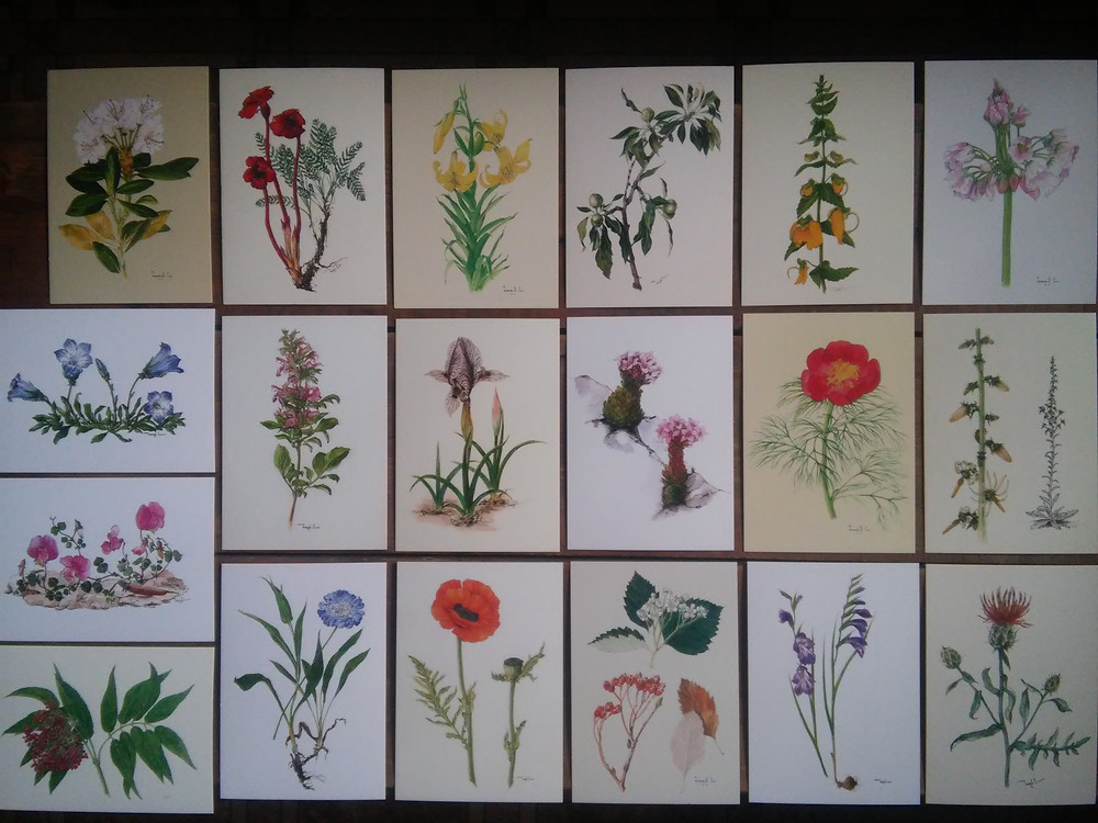 The botanical postcards of the project