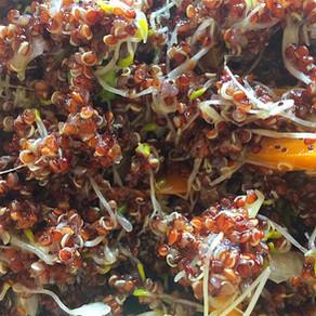 Ensalada de Quinoa Roja y Brotes de Alfalfa