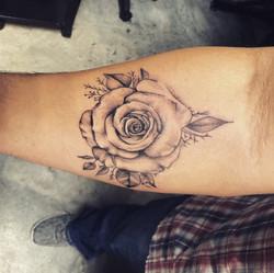 Light Color Rose
