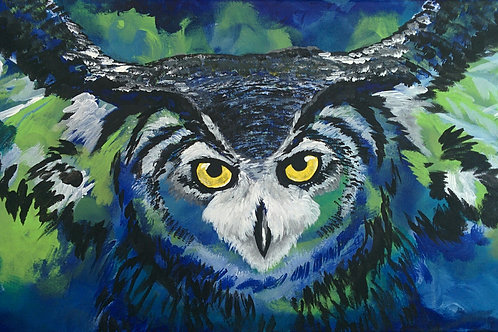 Blue Owl - Mavi Baykuş