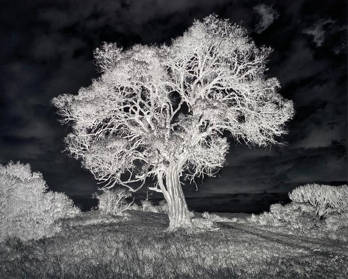 The tree of light - Borana Kenya.jpg