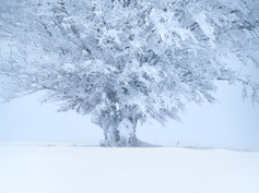Like a dream of snow