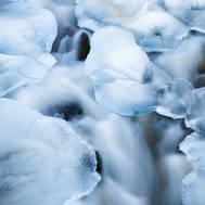 Ice petals III