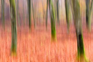 Beneath the beech woods