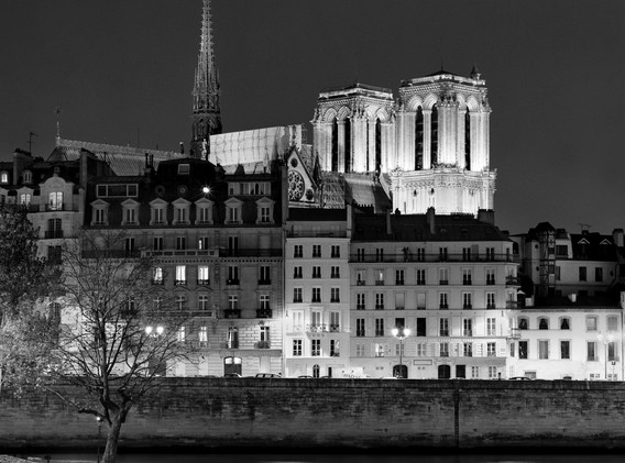 Notre Dame de Paris and the Willow tree