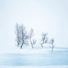 Arctic silhouettes I