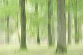 Beneath the oaks