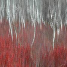 Colors of the peatland I