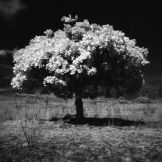 Tree of life (1505AUN39_08).jpg
