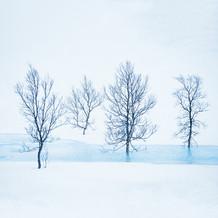 Arctic silhouettes II