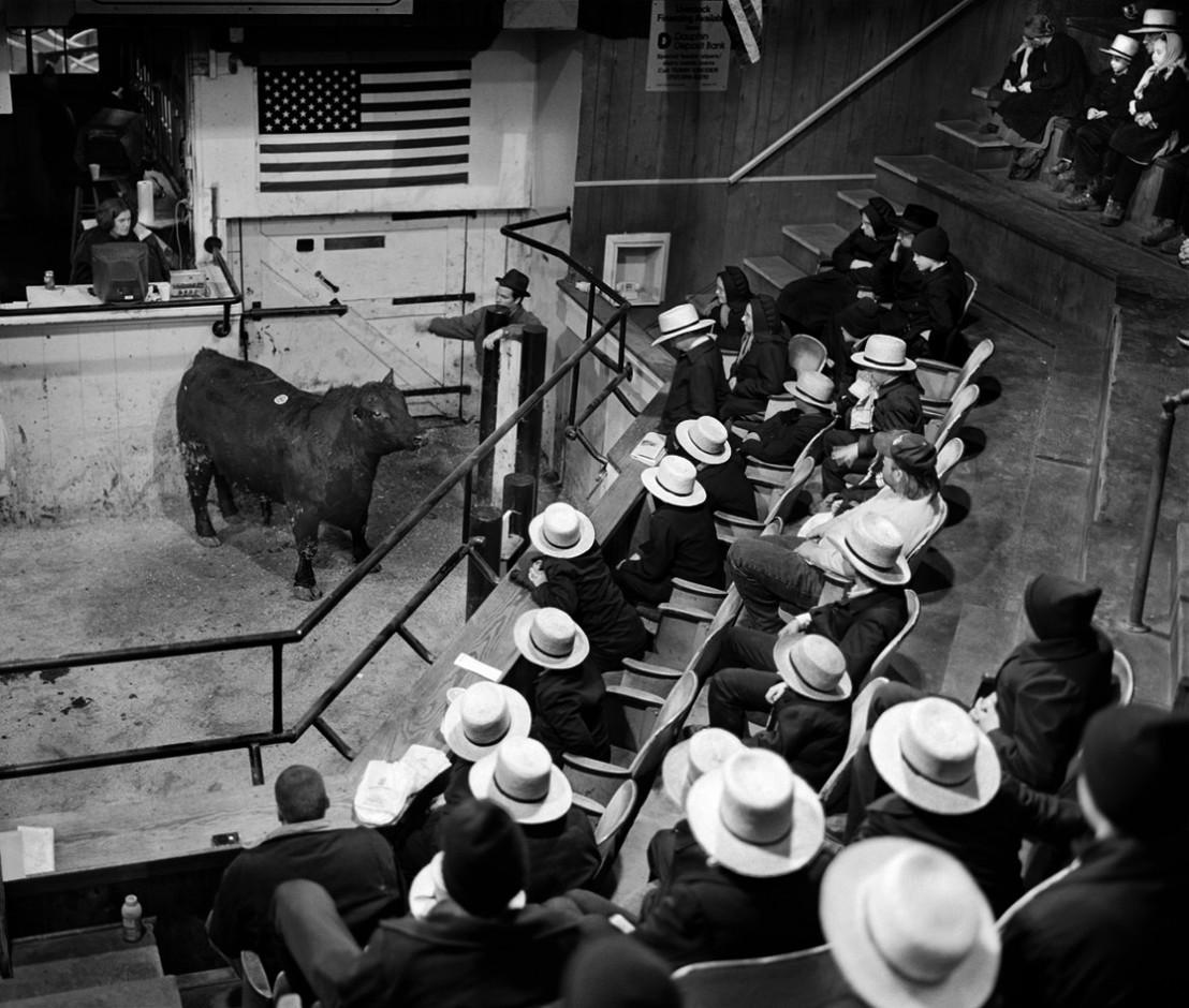 AmishCounty_Bulls_12HD_edited3_final-cop