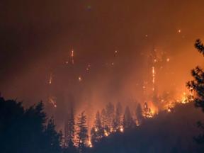 Gel vegetal pode prevenir incêndios florestais