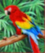 Jungle Macaw CP.jpg