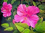 Morning Hibiscus Best.jpg