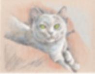 Grey Cat.jpg