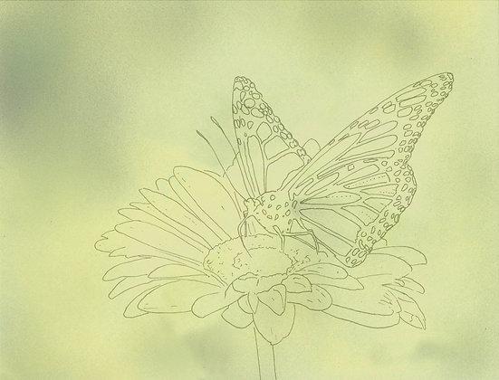 Monarch Pre-Patterned Paper