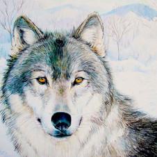 """""""Snow Wolf"""""""
